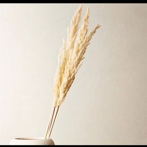 "Other - 3 pcs ERYANTHUS stems 48"" Skinny Pampas Grass."